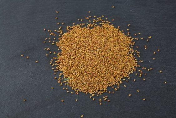Bio Saatgut Alfalfa. Gute Keimfähigkeit für Sprossen und Mikrogrün