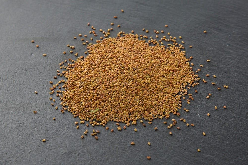 Bio-Keimsaat Alfalfa