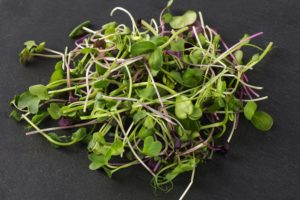 Microgreens Radieschen, Rettich, Sonnenblume und Erbse