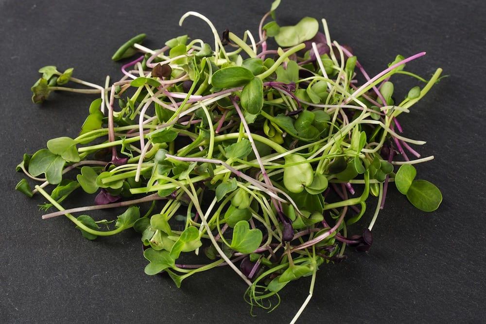 Microgreens Radieschen Rettich Sonnenblume und Erbse