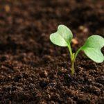 Erde für Microgreens (Anwendungsbeispiel)