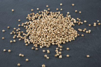 Bio Saatgut Koriander. Gute Keimfähigkeit für Sprossen und Mikrogrün