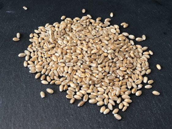 Bio-Saatgut Weizen. Gute Keimfähigkeit!