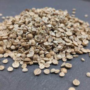 Bio Saatgut Koriander (gesplittet). Gute Keimfähigkeit für Sprossen und Mikrogrün
