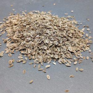 Bio Saatgut Dill. Gute Keimfähigkeit für Sprossen und Mikrogrün