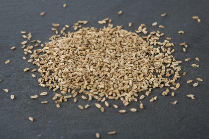 Bio Saatgut Fenchel. Gute Keimfähigkeit für Sprossen und Mikrogrün