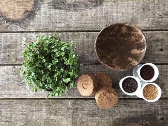Grow-Grow Nut Starterpaket - Inhalt