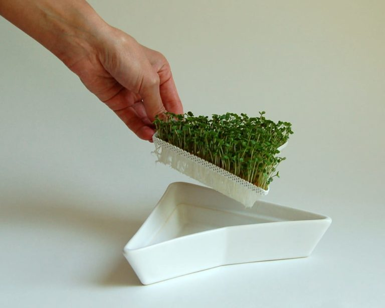 Sprouting trays - Cultivation Step 4