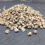 Bio-Microgreen und Sprossen Saatgut Spinat. Gute Keimfähigkeit!