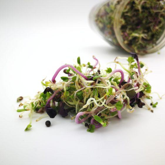Bio-Sprossenmix Vitamin angebaut im Sprossenglas